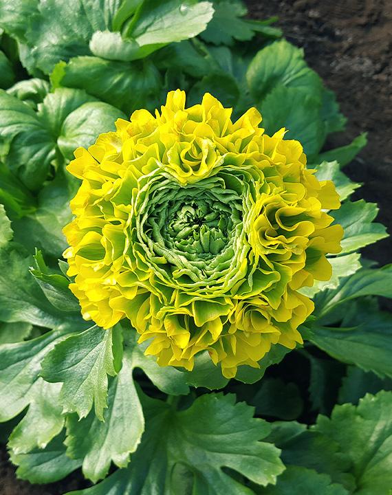 fiore-la-nuova-floricoltura